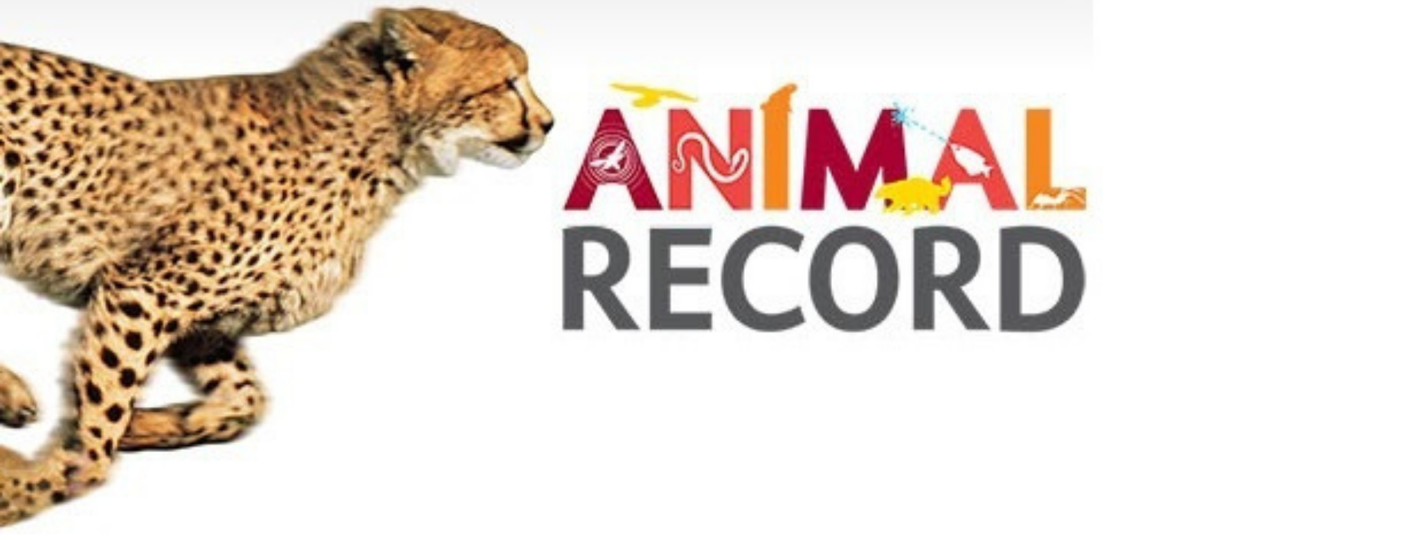 Read more about the article Interesting sporting records of animals that deserve our attention