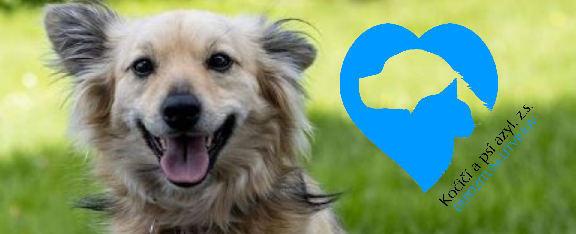 Read more about the article We have supported good things together – Litvínov Dog Deposit
